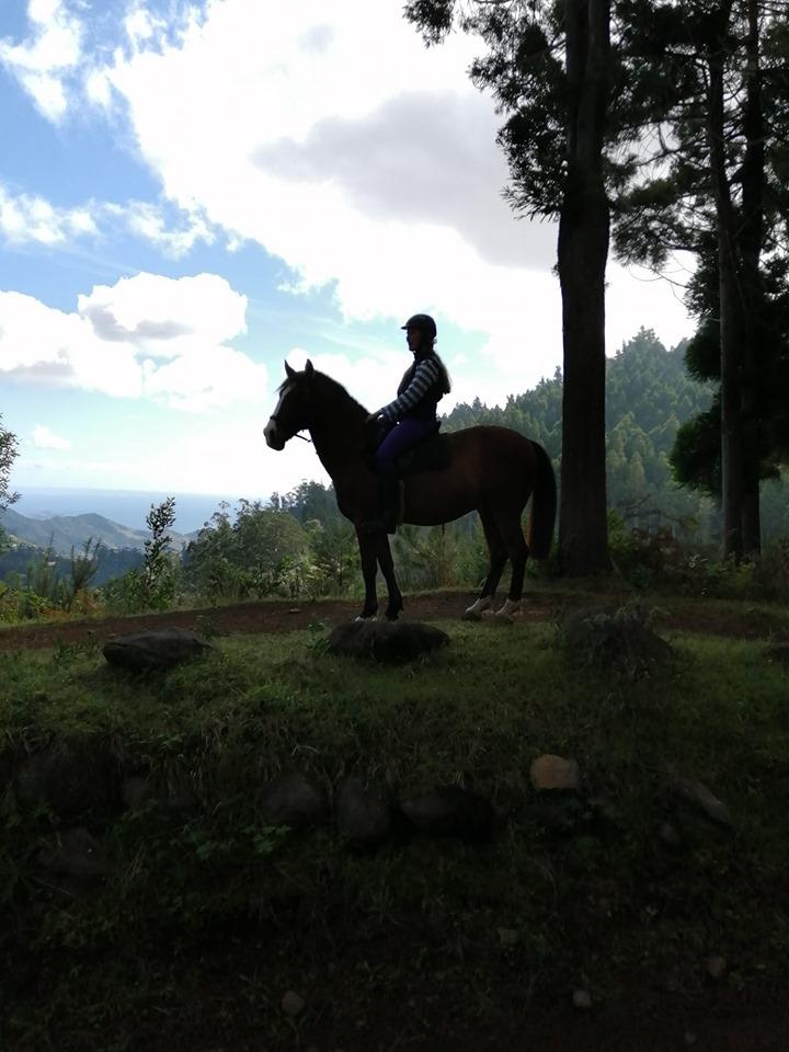 madeira horse riding 1